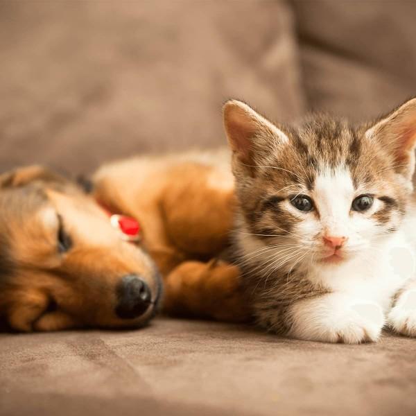 welthaustiertag-hund-katze